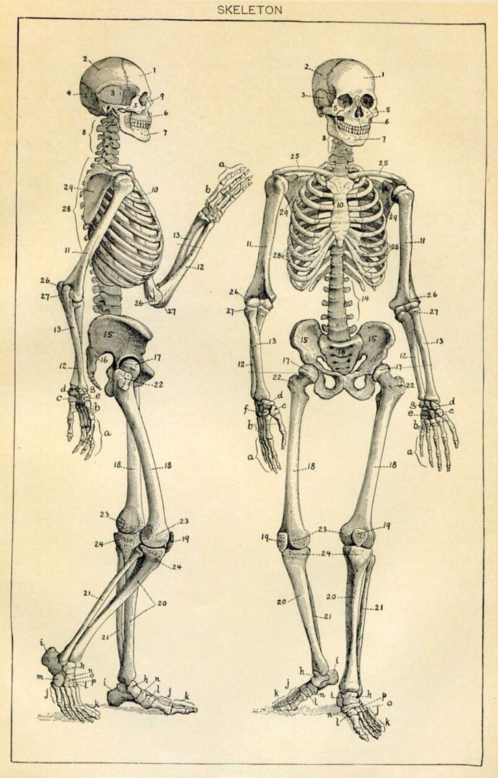 321 best Anthropology - Human Anatomy images on Pinterest   Human ...