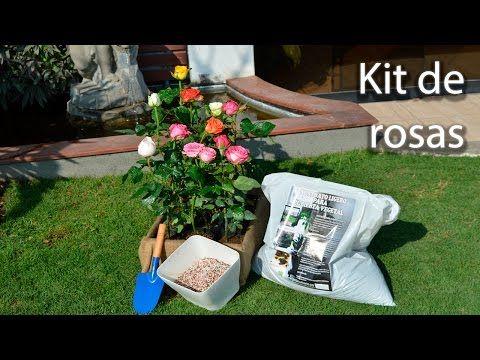 Las 25 mejores ideas sobre plantar rosas en pinterest y for Jardines verticales introduccion