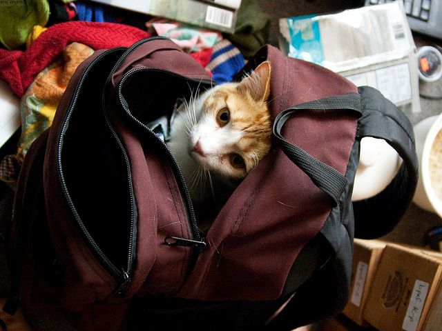 How To Pack For Southeast Asia   Cats should stay home, of course! Sorry, kitty.    http://thaholiday.com/how-to-pack-for-southeast-asia/