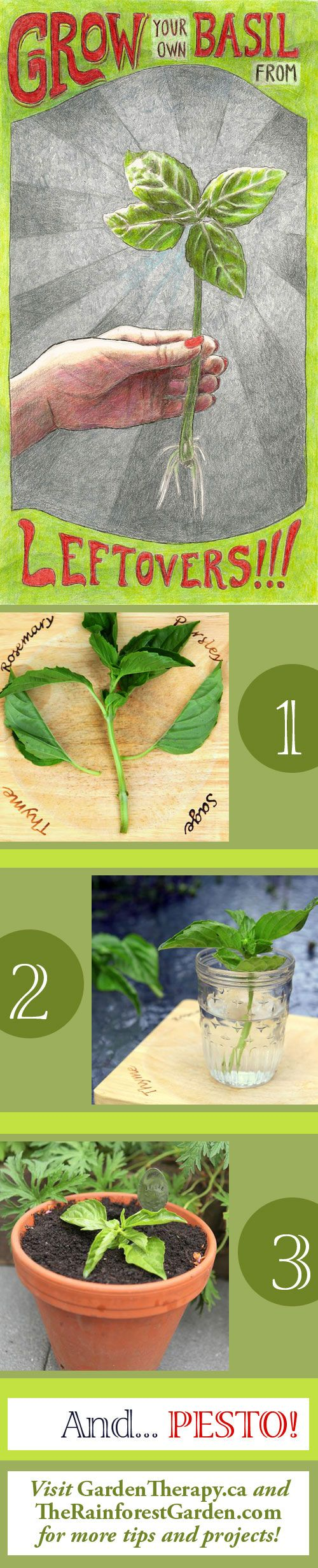 How to Grow Basil from Cuttings -: Herbs Basil, Gardens Therapy, Gardens Ideas, Growing Basil From Cut, Herbs Gardens, Cut Gardens, Growing Herbs Cut, Gardens Herbs, Basil Plants