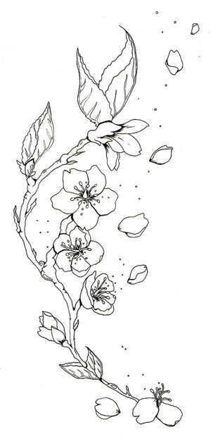 Cherry Blossom Tattoo Drawings