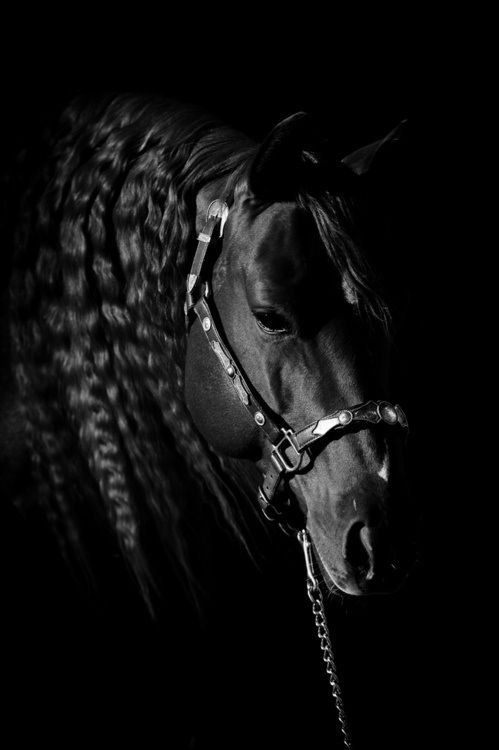 The beauty of a Black Horse
