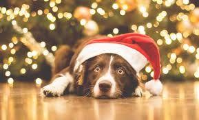 Картинки по запросу обои на рабочий стол новый год собаки