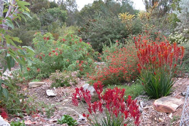 Australian native garden design ideas google search my for Native plant garden designs