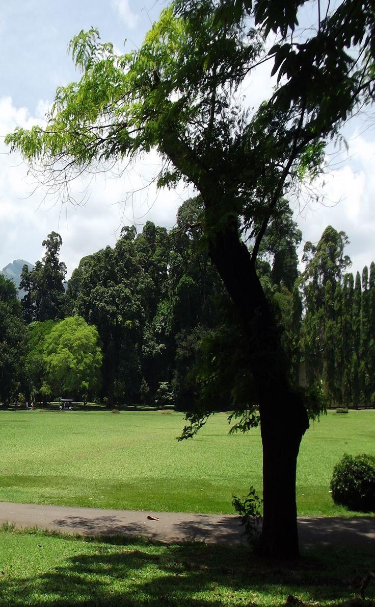 Royal Botanical Gardens Peradeniya Kandy Sri Lanka Photography By Zamaan