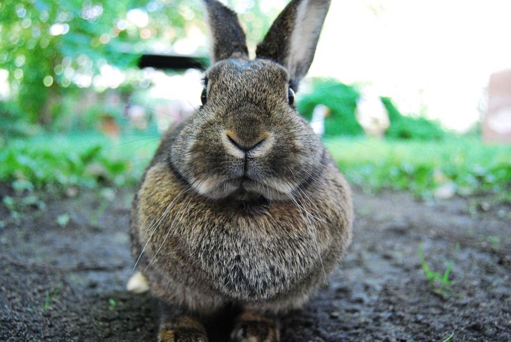 How to Keep Rabbits out of Your Garden Organically.  I hope this works.  I just might do the whole yard.