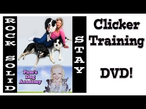 125 best dog tricks images on pinterest dog training training train a rock solid stay dvd pams dog academy www fandeluxe PDF