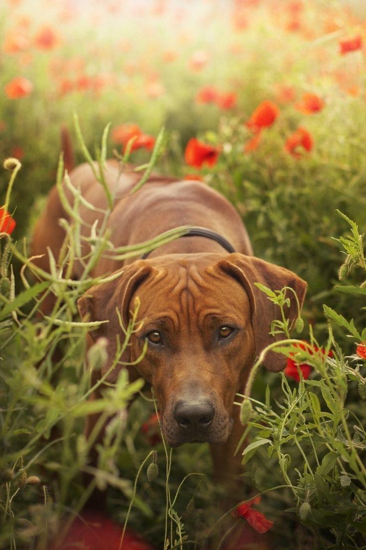 Photograph loving those poppy fields! by Hannah Meinhardt on 500px