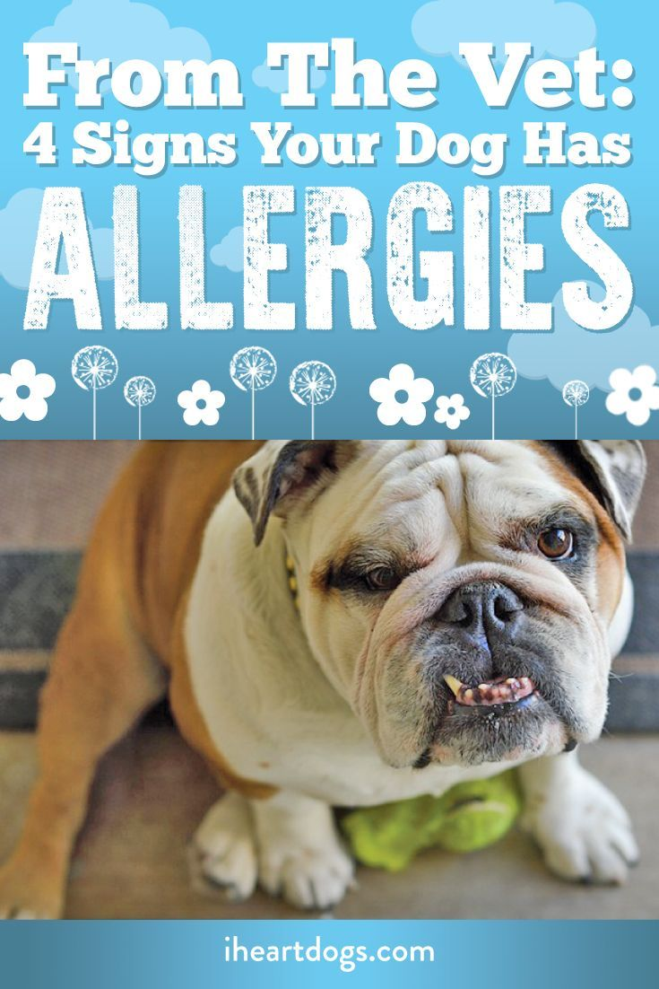 From The Vet 4 Signs Your Dog Has Allergies Dogs Your Dog Pets