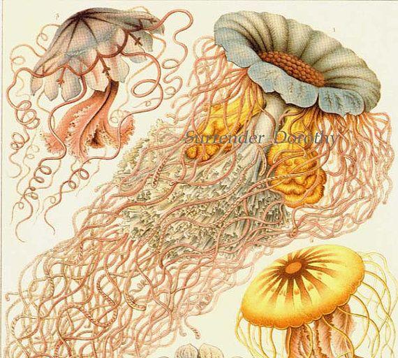 99 Best Vintage Science Amp Nature Illustrations Images On