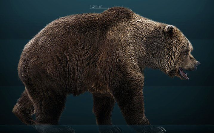 "The magnificent Cave Bear (a.k.a. ""Short-faced Bear""). Not a good companion animal."