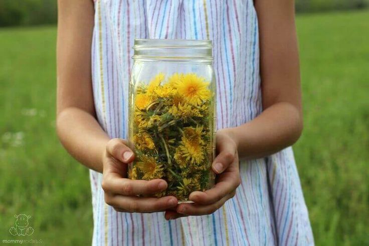 """Remember the joy ofclosing your eyes and blowing with all your might on a dandelion puffball . . . possibly while someone nearby cringed at the thought of all those """"pesky weed"""" seeds spreading? Well, although the saying goes that some may see a weed and others see a wish, they're not weeds at all …"""