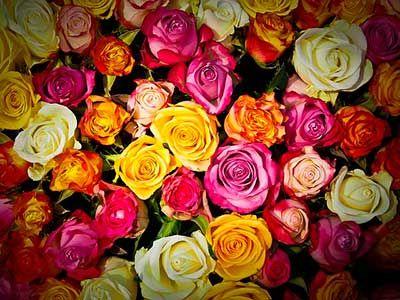 La Rosa, desde siempre, ha sido muy apreciada tanto por razones de estética o aroma como por su rica valoración simbólica. Bajo esta, la rosa es considerada desde símbolo de búsqueda, pureza o iniciación, hasta portadora alquímica de nobles y desusadas cualidades. Seguramente, el significado simbólico más profundo de la rosa es el de custodia …