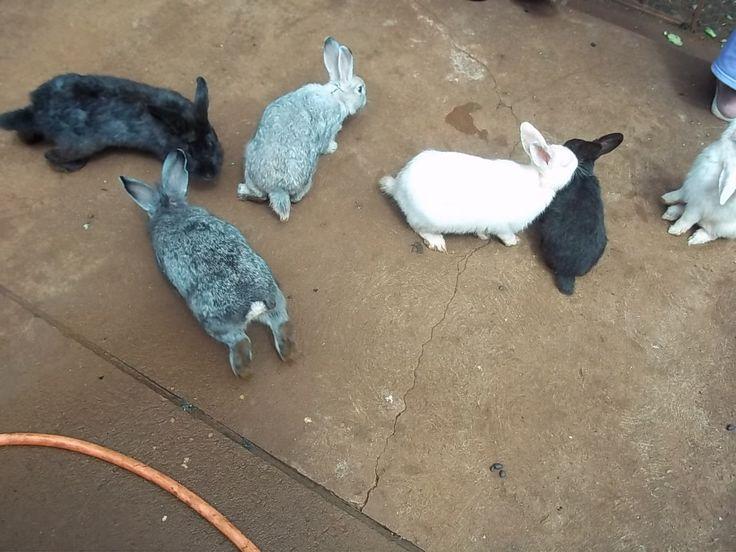 Um montão de coelhos em casa!!!