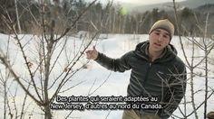 """Permaculture, auto-suffisance et chauffage au compost dans les collines du Vermont - Possible.org - Ben Falk est un designer en permaculture établi à Moretown, dans le Vermont. Dans cette vidéo, il nous parle de la vie relativement auto-suffisante qu'il mène, et des systèmes qu'il utilise pour s'adapter au climat hivernal. Il explique le fonctionnement de son poêle à bois, qui produit toute son eau chaude """"gratuite"""", et du système de chauffage au compost qui réchauffe sa serre."""