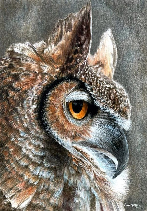 Realistic Animal Pencil Drawings (18)