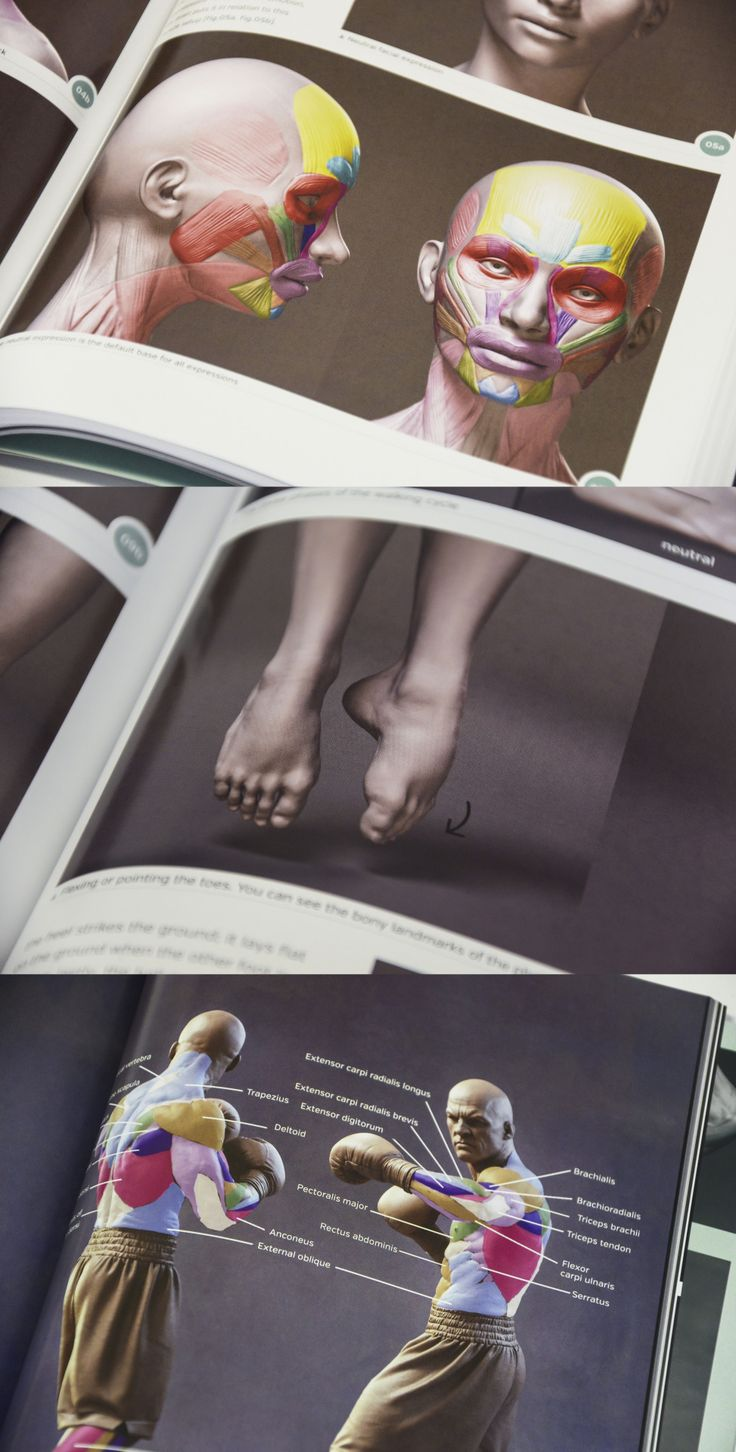 Some of the highlights of the Anatomy for 3D Artists book from 3dtotal Publishing