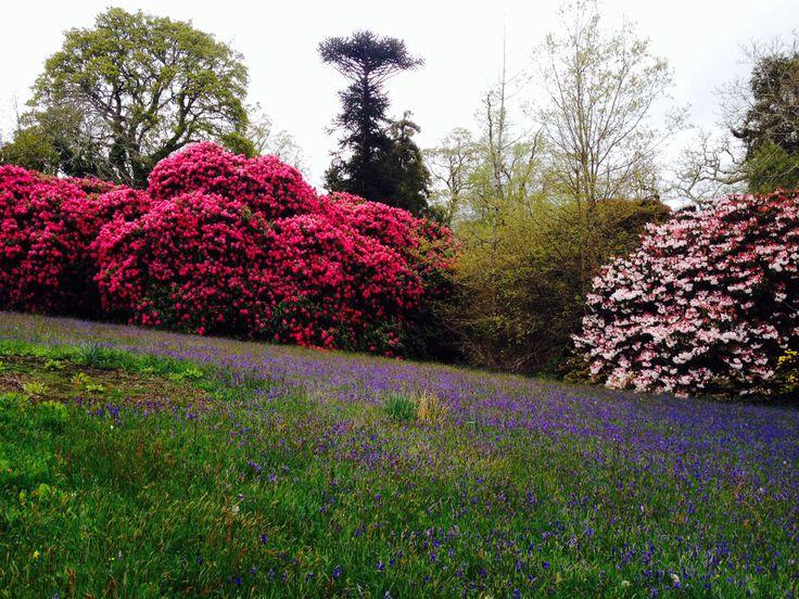 Enys Garden, Penryn, Cornwall