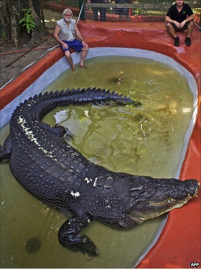 """Cassius Clay, a 100-year-old saltwater crocodile, awaits a weigh-in at his pool in Queensland, Australia. He has officially been recognized by Guinness as the largest crocodile in captivity anywhere in the world."""