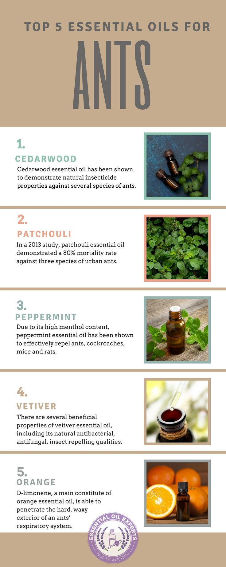 Spiders, Ants, and Wasps OH MY! Thats a types of bugs. Try these natural insect repellents  to get rid of  those pesky insects.  Do you have a way of getting rid of pesky insects?  Tell us below in the comment!