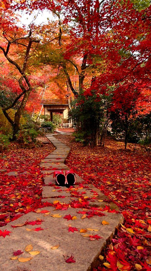 Autumn in Kyoto, Japan * • .¸¸❥