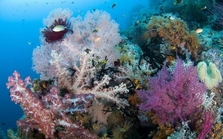 Фото Острова Раджа Ампат, Индонезия