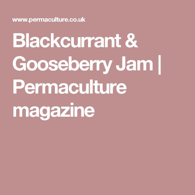 Blackcurrant & Gooseberry Jam | Permaculture magazine
