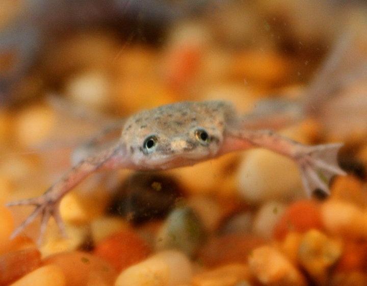 Quiz & Worksheet - What are Aquatic Frogs? | Study.com