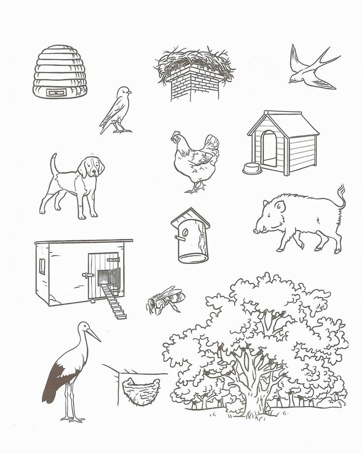 1000 images about logo dieren on pinterest animales kids pages and farms. Black Bedroom Furniture Sets. Home Design Ideas