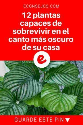 """Plantas no necesitan luz   12 plantas capaces de sobrevivir en el canto más oscuro de su casa   Para continuar recibiendo en su facebook a diario este y otros consejos, basta dar click en """"me gusta"""" y compartir, GRACIAS POR SU APOYO! :)"""