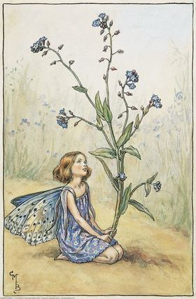 Illustration for the Forget-Me-Not Fairy from Flower Fairies of the Summer.  A girl fairy wearing a purple dress kneels facing right, holding a forget-me-not before her.  										   																										Author / Illustrator  								Cicely Mary Barker