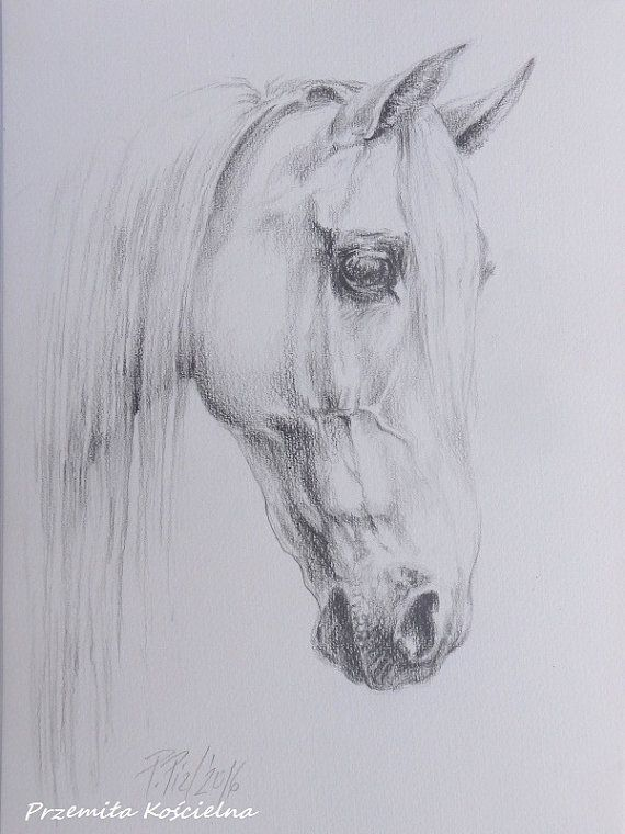 HORSE PORTRAIT Horse Head Graphite Pencil by CanisArtStudio, #HORSEPORTRAIT, #animalart, #horseart