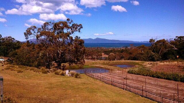 Swansea ...Tasmania