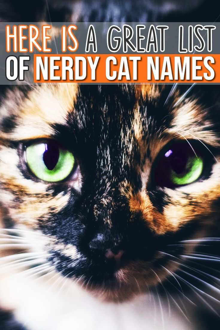 Awesome List Of Names For Your Nerdy Kitty Cat Cat Names Funny Cat Names Cute Cat Names
