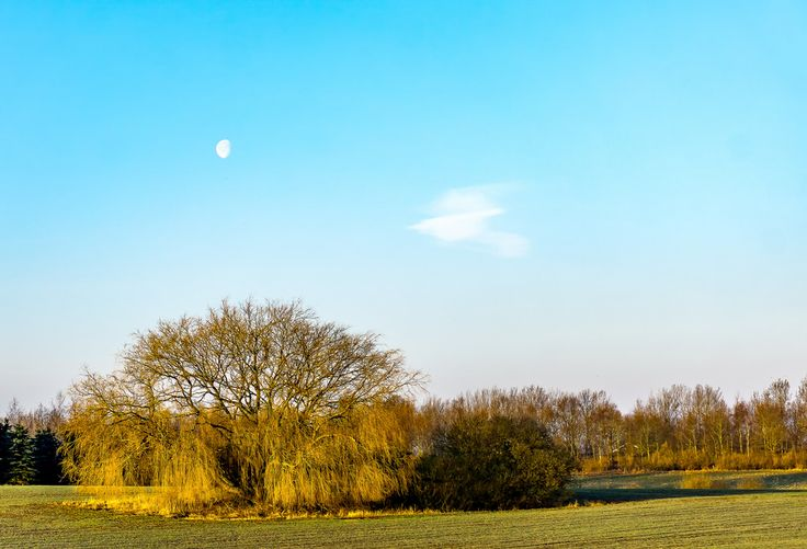 Spring dressed in the morning sun | by rikkechemnitzphotos