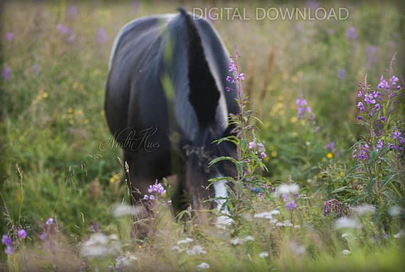 Horse in Flowers. Horse Photography  Digital Download
