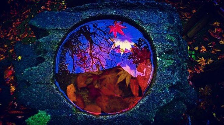 #Autumn #Fall #Foliage #Color #Colorful #Kenroku #Garden #Kenrokuen #KanazawaCity #Kanazawa #Ishikawa #Prefecture #Japan #Nippon #Three #Great #Gardens #Rain #Rainy #Day