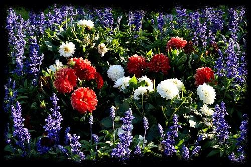 Blommor i Stadsparken Borås Stad