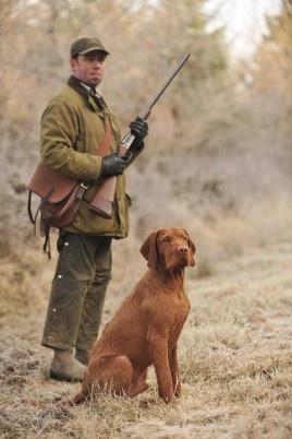 Stoney Lonesome Photos | Hunting | Vizsla hunting dog retrieving ...
