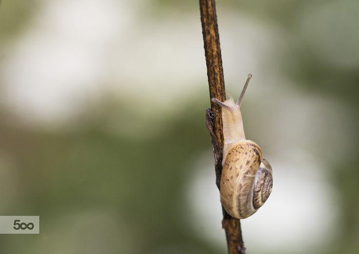 Snail by Nicola Di Nola on 500px