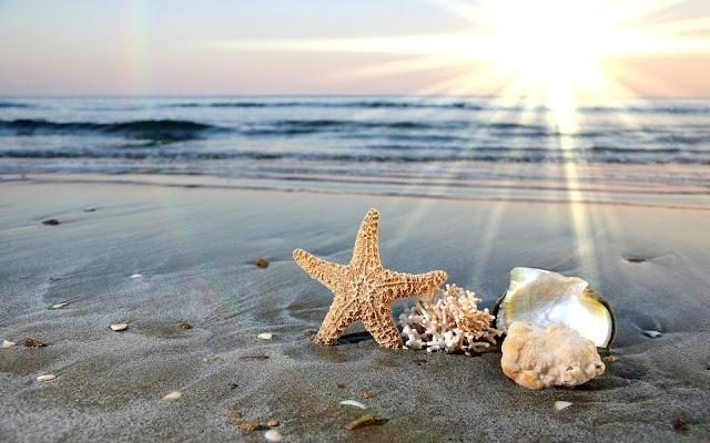 Conchas Marinas Estrellas de Mar Playas y Arena: Sands, Beaches, Sea Shells, Sea Art, Starfish, Ocean Waves, Desktop Wallpapers, Seashells, Summer Sunshine