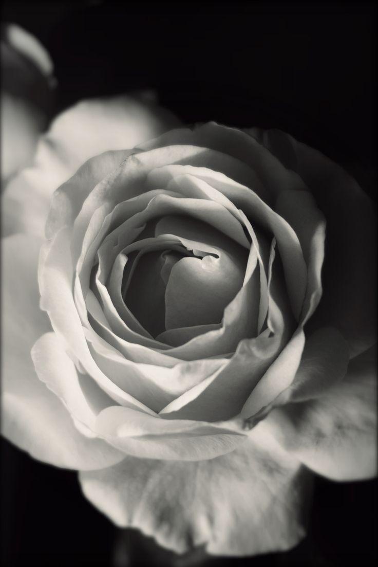 Roses B&N