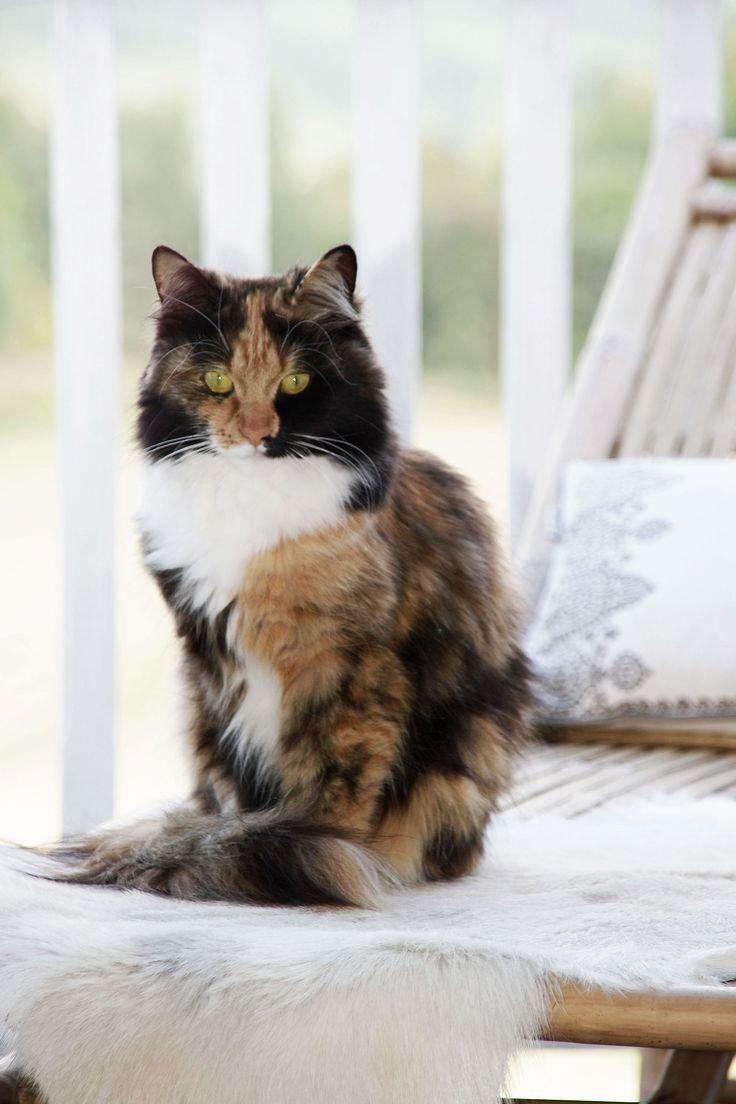 Kat Cat