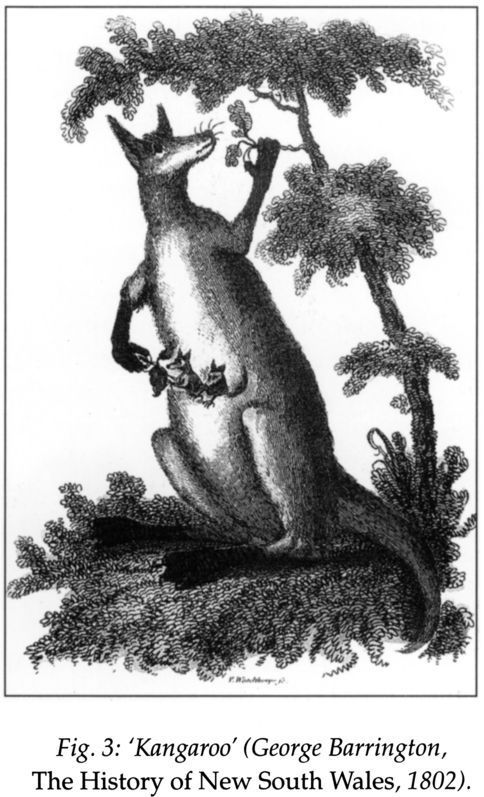 Fig 3: 'Kangaroo' (George Barrington, The History of New South Wales, 1802). [print]