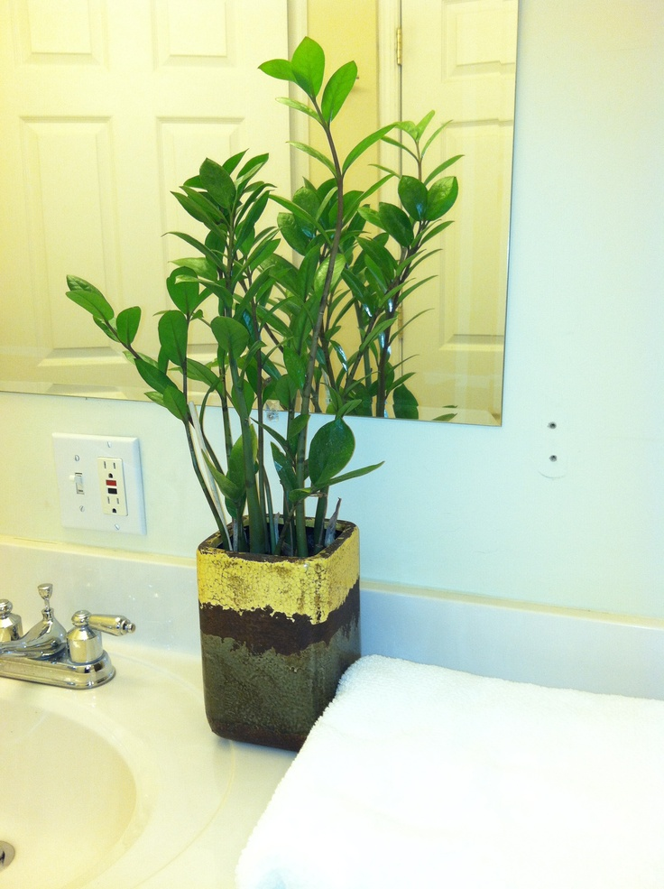 17 Best Images About Easy To Care For Indoor Plants On