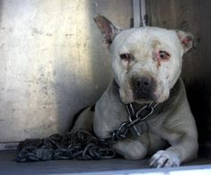 Dog Who Spent Years Chained Up Finally Gets To Be A Puppy