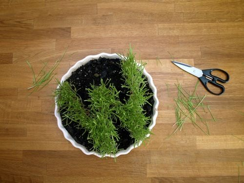 DIY: Wheat Grass Monogram. Cute for spring time party favors or place settings.