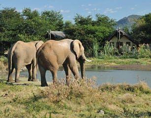 Olifante kom drink water by Tau Game Lodge in die Madikwe Wildreservaat in Noordwes.