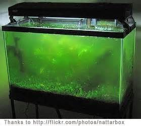 10 best algae images on pinterest fish aquariums for Black algae in fish tank