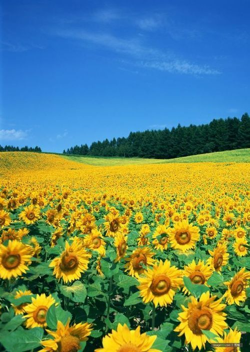 I looooooove fields of flowers :) They testify that Christ loves us and created simple beauties for us to enjoy and treasure!
